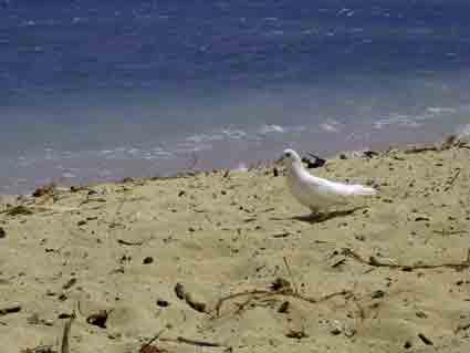 ハワイ・・・地平線と鳩